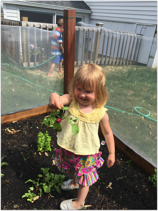 Radishes grow quickly making it exciting for the kids
