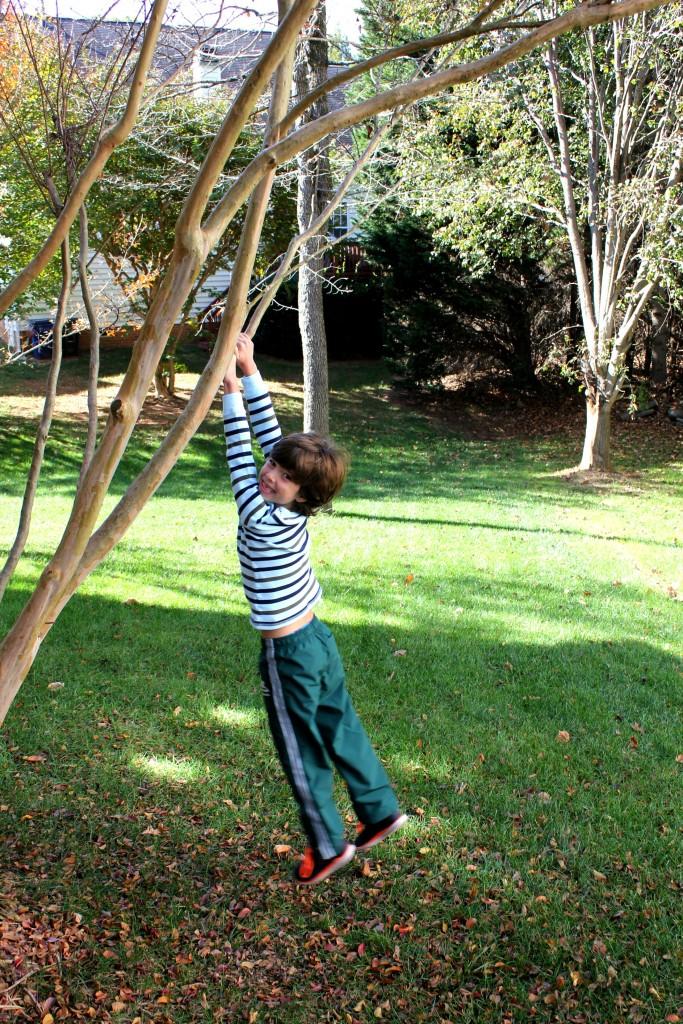 my-tree-climber