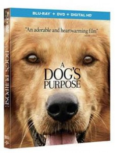 A Dog's Purpose BLU-RAY Release Giveaway