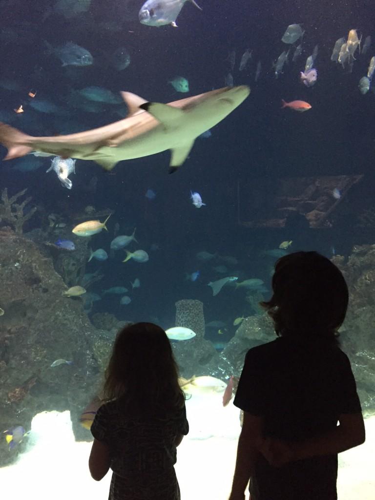 shark reef at Greensboro Science Center Herpetarium