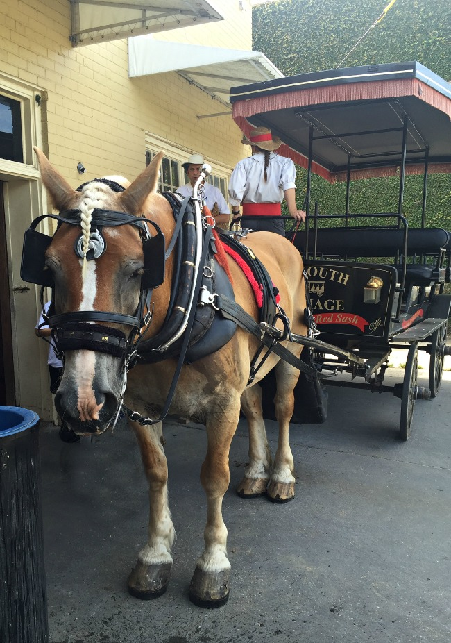 Luke the carriage horse